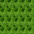 Punctuation  Made of Parsley — Stockfoto