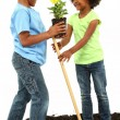Adorable Black Brother and Sister Planting Flowers Together — Stock Photo
