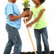 Stock Photo: Adorable Black Brother and Sister Planting Flowers Together