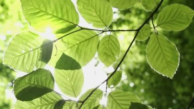Blätter — Stockvideo