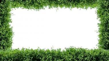 Zelený rámeček — Stock video
