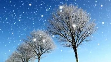 Winter Background — Stock Video