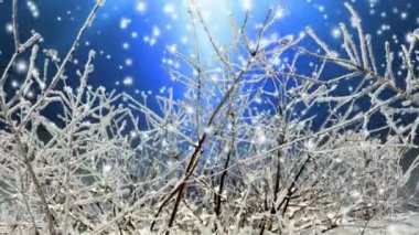 Winter Scene — Stock Video