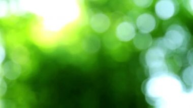 Forest Bokeh — Stock Video