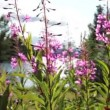 Stock Video: Summer Flowers