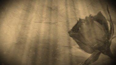 玫瑰背景 — 图库视频影像