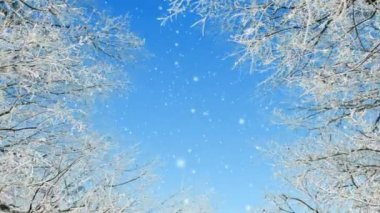 Winter — Stock Video