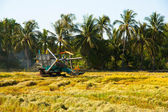 Harvest Car in the rice field — Stock Photo