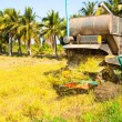Stock Photo: Harvest Car in rice field