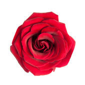 Red rose isolated on white background — Stok fotoğraf