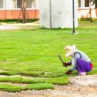 Planting New Grass  — Stockfoto