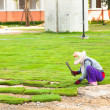 Planting New Grass — Stock Photo