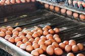 Máquinas de ovos de tamanho separado — Foto Stock