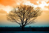 Silhouette of dry tree at sunset — Stock Photo