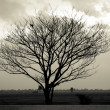 Dramatic sky over lonely dead tree. Art nature. — Stock Photo #33800789