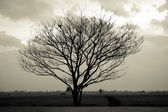 Dramatic sky over lonely dead tree. Art nature. — Stock Photo