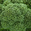 Texture of broccoli — Stock Photo