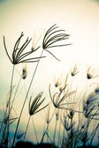 Vintage floral grass — Stock Photo