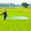 Farmer spraying pesticide in the rice field — Stock Photo