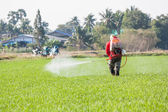 Farmer spraying pesticide in the rice field — Stockfoto