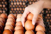 Eggs in women hands — Stock Photo