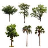 Set of tree isolated on white background — Stock Photo