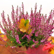 Stock Photo: Autumn leaves and heather