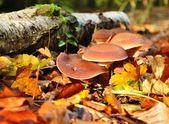 Autumn mushrooms — Stock Photo
