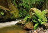Nehir kamenice — Stok fotoğraf