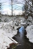 Winter creek — Stockfoto
