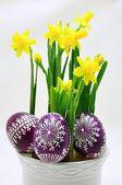 Daffodils — Stock Photo