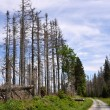 Forest destroyed by bark beetle — Stock Photo #27073861