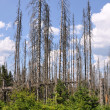 Forest destroyed by bark beetle — Stock Photo #29227175