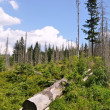 Forest destroyed by bark beetle — Stock Photo #29227327