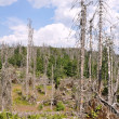 Forest destroyed by bark beetle — Stock Photo #29283447