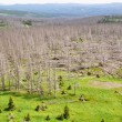Forest destroyed by bark beetle — Stock Photo #29284145