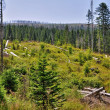 Forest destroyed by bark beetle — Stock Photo #30032565