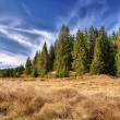 Stock Photo: Autumn blue sk, meadows and woods