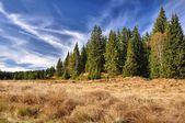 Autumn blue sk, meadows and woods — Stock Photo
