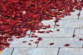 Rote Blätter auf dem Bürgersteig — Stockfoto