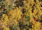 Detail of autumn forest — Stock Photo