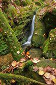 Otoño creek — Foto de Stock