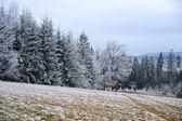 Frosty winter landscape — 图库照片