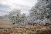 Frosty winter landscape — Stock Photo