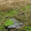 Stock Photo: Stone in grass