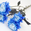 Nice blue flowers — Stock Photo