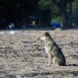 Puppy sitting on the sand waits — Stock Photo