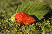 Strawberry on green grass — Stock Photo