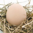 Egg is in nest of hey — Stock Photo #13475822
