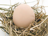The egg is in nest of hey — Stock Photo